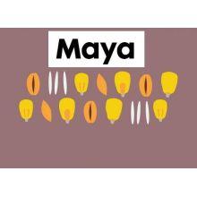 Maya - 5ltr -  Bromoxynil, image