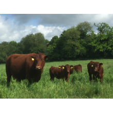 Holistic Planned Grazing 5-Day Training Cours, image